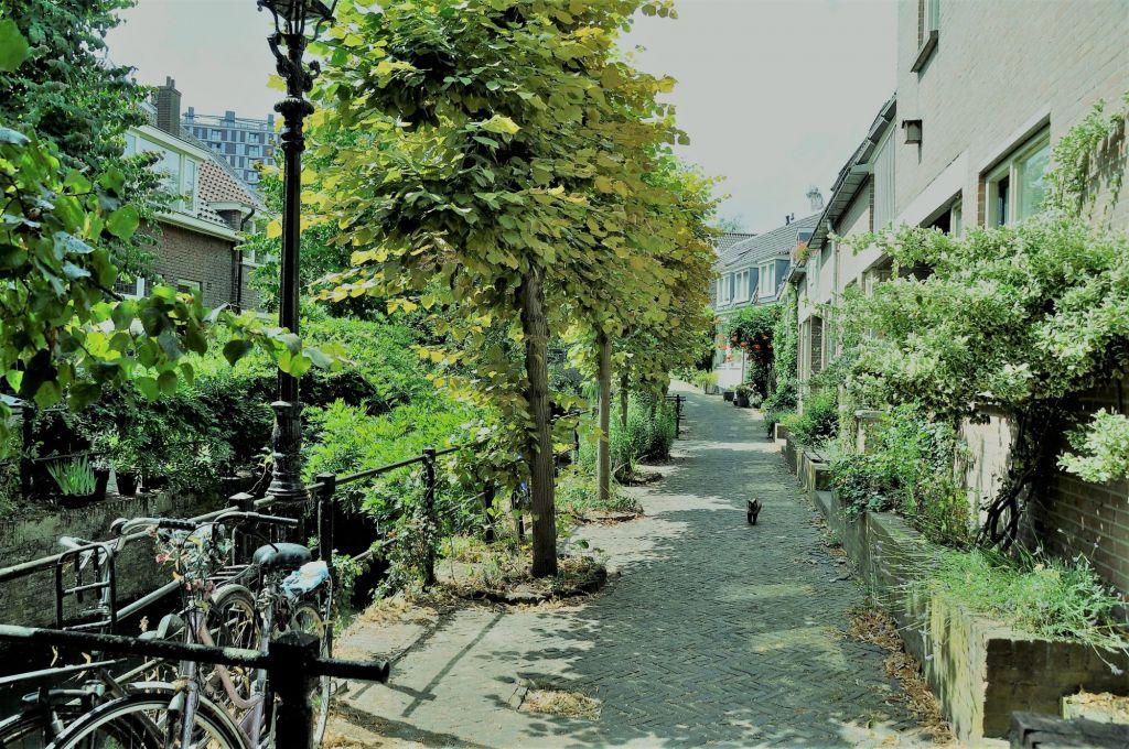 Groen straatje in Utrecht