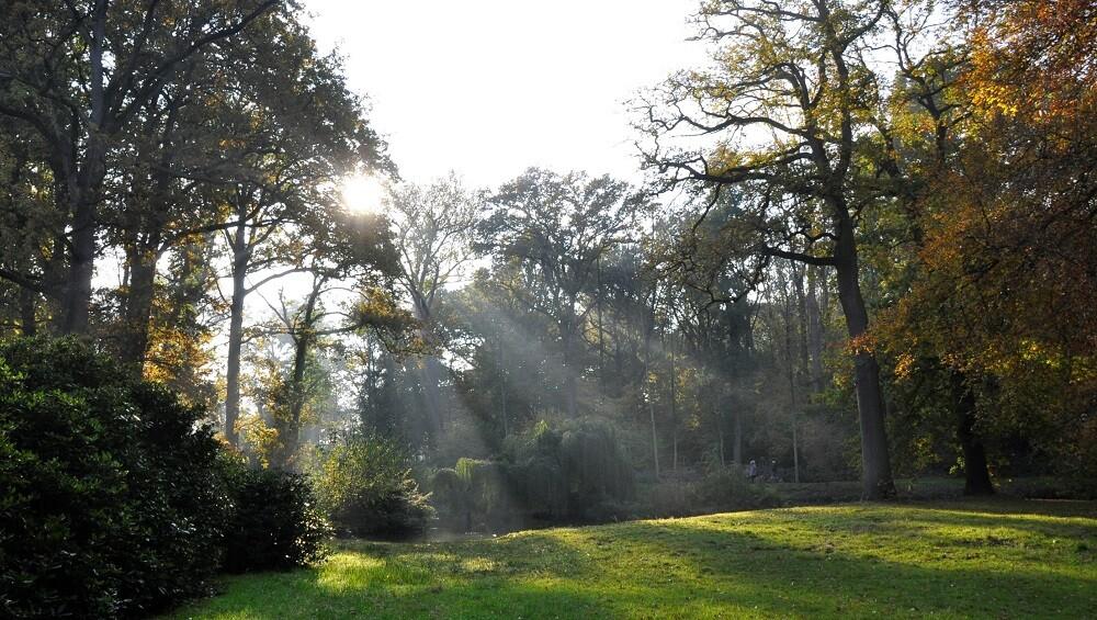 Lichtstralen van de zon in Amelisweerd