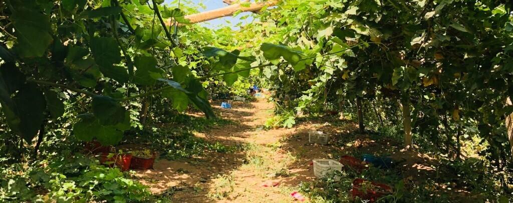 milieuvriendelijk tuinieren
